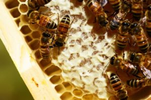 What's The Buzz: Backyard Beekeeping @ Rodgers Ranch Heritage Center | Pleasant Hill | California | United States